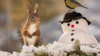 Azt hitted a mókusok nem ünneplik a karácsonyt? Tévedtél, nézd csak ezeket a fotókat!