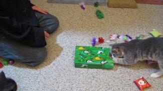 Tanulságos videó arról, hogyan bontják ki a cicák a karácsonyi ajándékukat