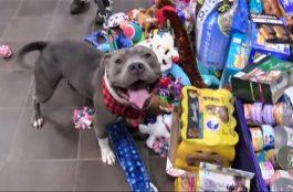 Így választják ki karácsonyi ajándékukat a menhelyi kutyusok