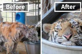 10 állati sztori 2016-ból, ami újra hitet adott az emberiségnek