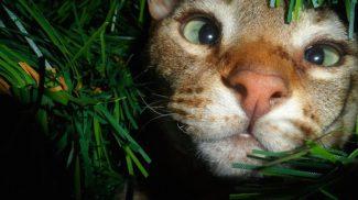 22 cuki macska, aki karácsonyfadísznek képzeli magát