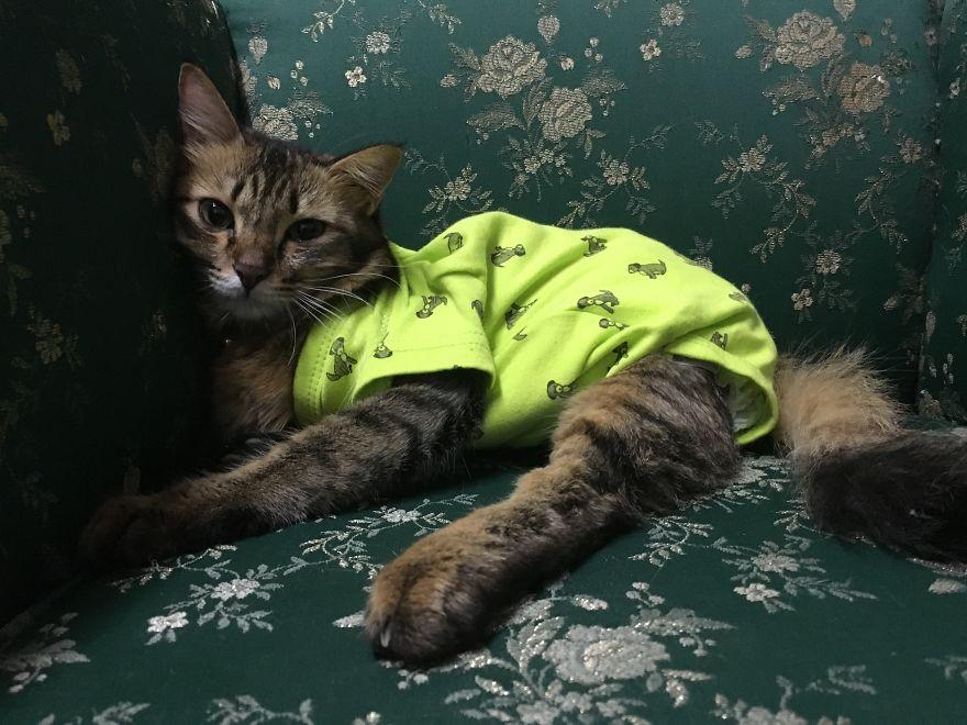 Babaruhák tartják melegen a lebénult, örökbefogadott cicát