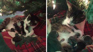 Igazi karácsonyi csoda: a fa alatt hozta világra kicsinyeit ez a cica
