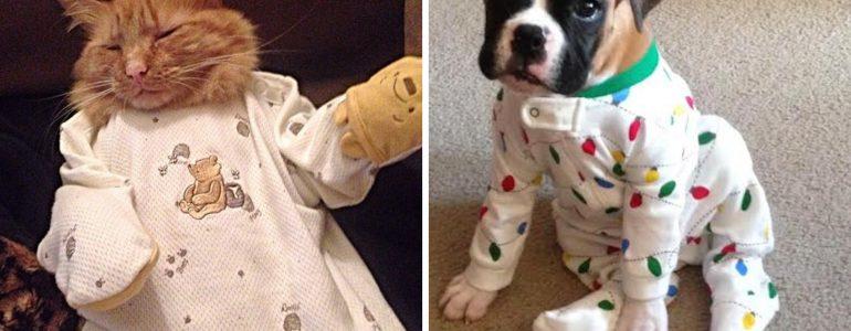 21 kis pizsamába bújtatott kedvenc, akiknél cukibbat nem találsz
