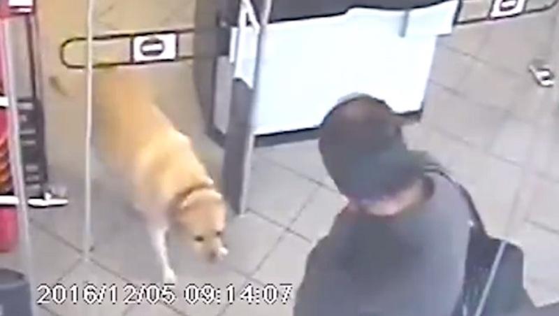 Kutyus fosztogatott egy váci élelmiszerüzletben