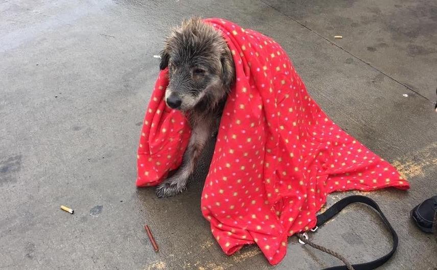 Megmozdulni is félt a parkolóban magára hagyott, ázott kutyus