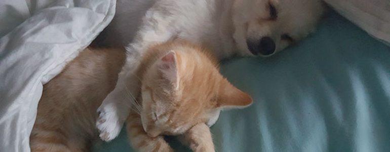 A nő örökbefogadott egy kutyát, a kutya pedig befogadott egy cicát