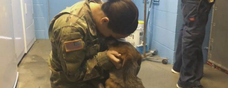 A katonanő azt hitte, sosem látja újra kutyáját… De íme a nagy találkozás pillanata!