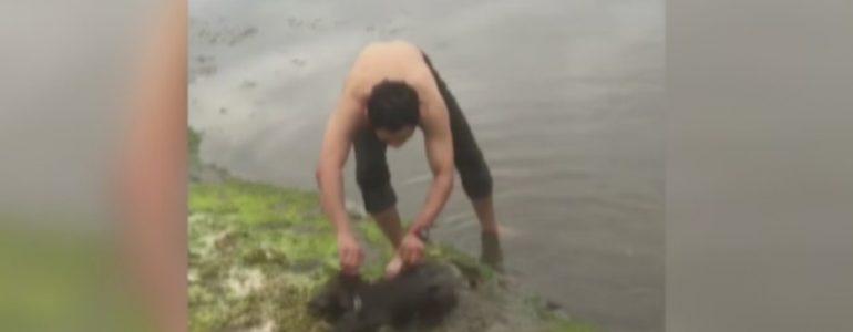 Az utolsó pillanatban ugrott a fuldokló koala után ez a hős férfi