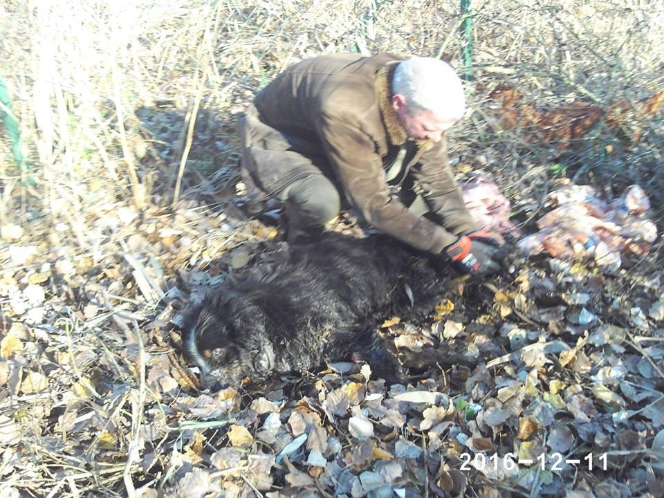 Kiskunlacházi mezőőrök mentették meg a jégbe fagyott kutyust
