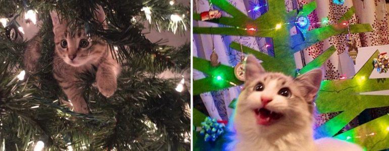 18 cica, aki már teljesen rápörgött a karácsonyra