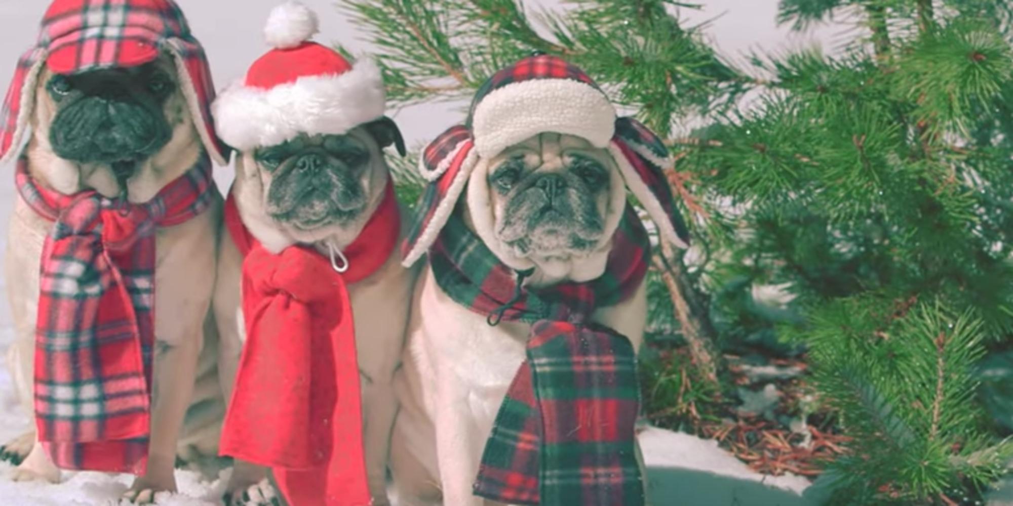 Idén ez a három mopsz varázsol karácsonyi hangulatot a szívedbe