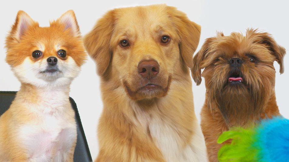 Így reagálnak a kutyák, mikor először játszanak macskajátékokkal