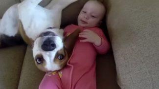 Itt a bizonyíték, hogy a kutyusok bébiszitternek is kiválóak