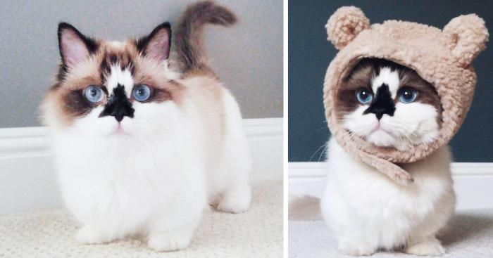 Az internet legújabb kedvence a cica, aki úgy néz ki, mint egy mesefigura