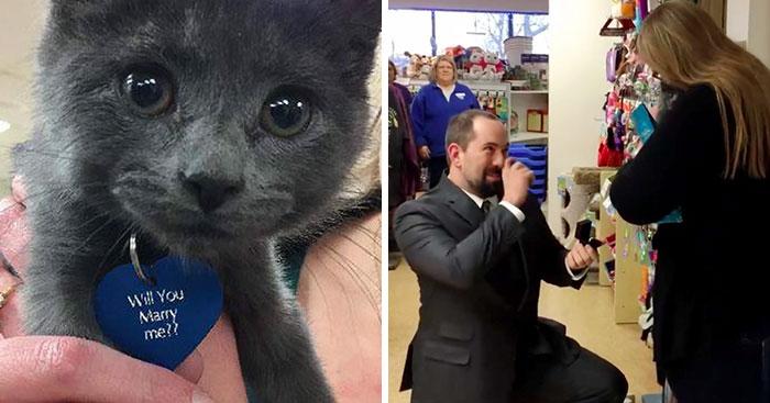 Mentett kiscicával kérte meg szerelme kezét az állatbarát férfi