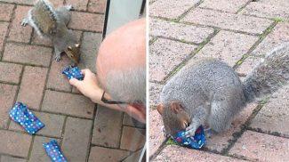 Imádja az internet a bácsit, aki apró ajándékokat készített a kertjébe látogató mókusoknak