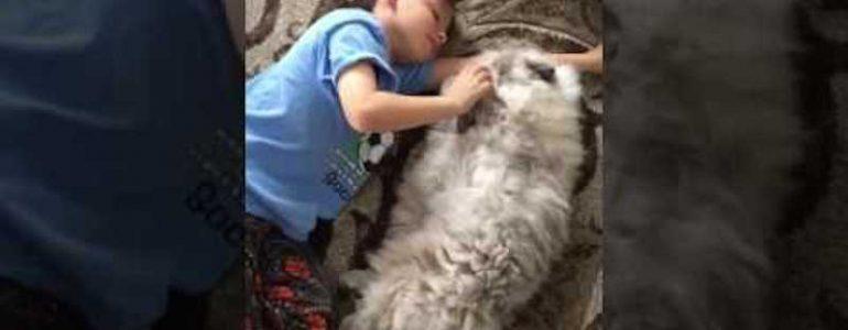 Hatalmas cica lett a kisfiú legjobb barátja