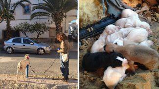 Azonnal bizalmat szavazott megmentőinek a törött lábú kutyus, így találták meg a kölykeit