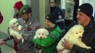 Három kutyakölyköt mentettek a lavina alá temetett olasz hotelből