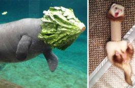 16 állati kudarc, amin lehetetlen nem nevetni