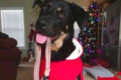 Mindenkit könnyekig meghatott a kutyus, aki megtalálta gazdái előző kedvencének nyakörvét