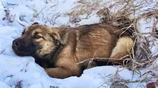 A hóban fagyott volna halálra a lebénult kutyus, ha nem találnak rá az állatmentők