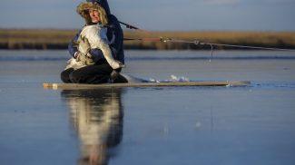 Megható fotókon a Tisza-tó jegébe fagyott hattyú mentése