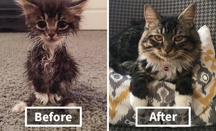 Nem sok esélyt adtak ennek a kiscicának, nézd mi lett belőle!