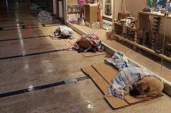 Megnyitották a kóbor állatok előtt az üzleteket, hogy legyen hová menekülniük a dermesztő hideg elől