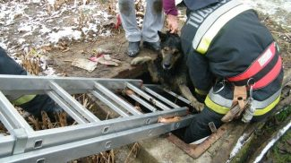 Jeges szennyvízbe esett kutya életét mentették meg Komlón a tűzoltók