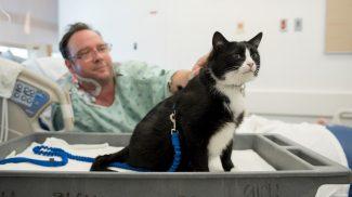 Kórházakat látogat a megmentett cica, hogy a betegek arcára mosolyt csaljon