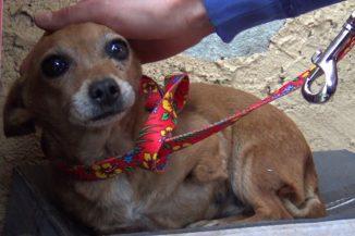 Cipősdobozban várta a háromlábú kutyus, hogy valaki végre észrevegye