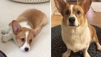 17 imádnivaló bizonyíték arra, hogy a kutyák egy pillanat alatt felnőnek
