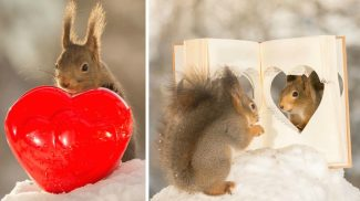 A te szíved is felmelegítik ezek a szerelmes hangulatban lévő mókusok