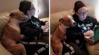 Nem bírja abbahagyni gazdája ölelgetését ez a megmentett pitbull