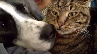 Bemutatjuk a világ legtürelmesebb macskáját