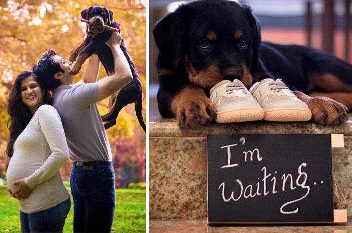 Azt a tanácsot kapták, hogy tegyék ki a kutyákat, mire jön a baba – Ezt tették helyette