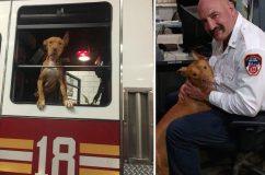 Tűzoltók fogadták be a szomorú kutyust, akit gazdái szívtelenül magára hagytak