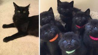 6 rosszcsont kölyökkel lepte meg megmentőit ez a gyönyörű cica