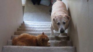 Ezekben a háztartásokban bizony a macska az úr