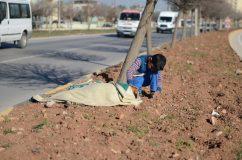 Visszaadja az emberiségbe vetett hitünket a kisfiú, aki a segítség megérkezéséig virrasztott az elgázolt kutyusnál