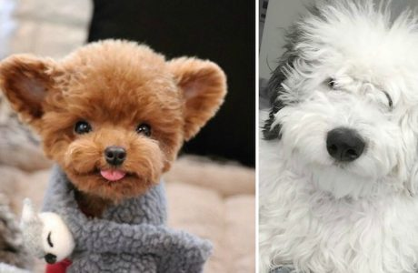 18 bolyhos kutyus, aki csak arra vár, hogy adhasson neked egy ölelést