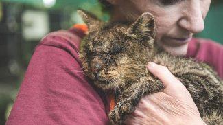Senki sem akart hozzányúlni ehhez a cicához, de végre talált valakit, aki megölelte