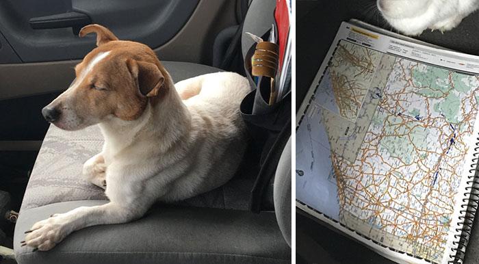 Nem volt hajlandó megmentőjével menni a kutyus, míg el nem intézett valami fontosat