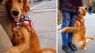 Bárkinek öleléseket osztogat a világ legszeretetreméltóbb kutyája