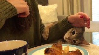 Ennek a macskának egyetlen küldetése van: elcsórni a gazdája reggelijét
