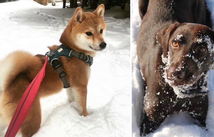 Hóban játszó kutyusokkal búcsúztatjuk a telet