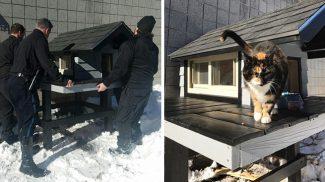 Ez a cica folyton felbukkant a rendőrörsön, ezért valami csodás dolgot tettek érte az egyenruhások