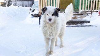 Kutya tartotta életben a mínusz 12 fokban kirakott gyereket